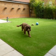 Artificial Grass for dogs Stevenage