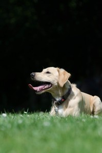 Five Ways Faux Turf Can Benefit Pets