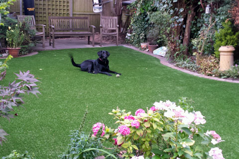 artificial-grass-dog-slider-dec-15