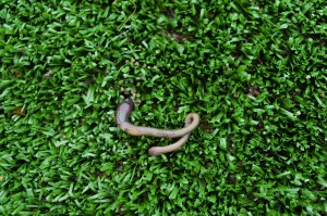 Synthetic Lawns – Eco-Friendly or Not?